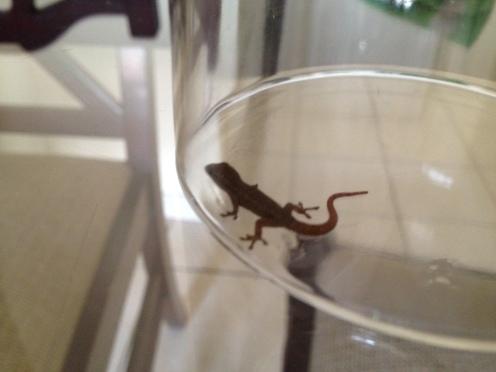 lizard in a glass