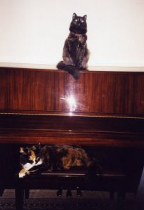 Piano,%20with%20cats