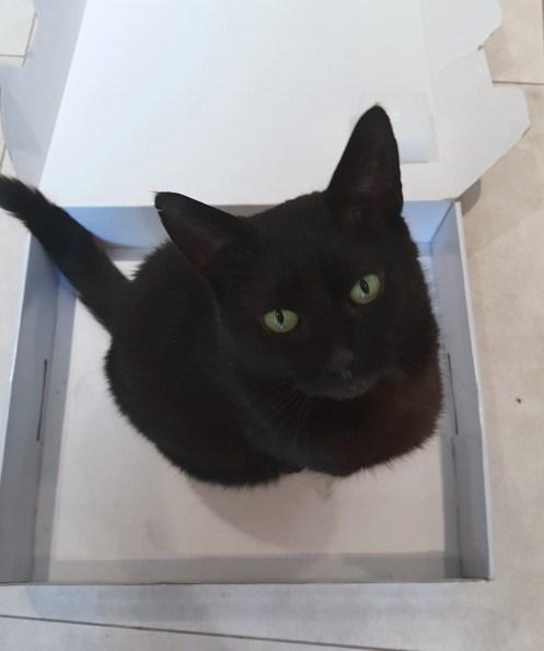 Kittehgaard in box