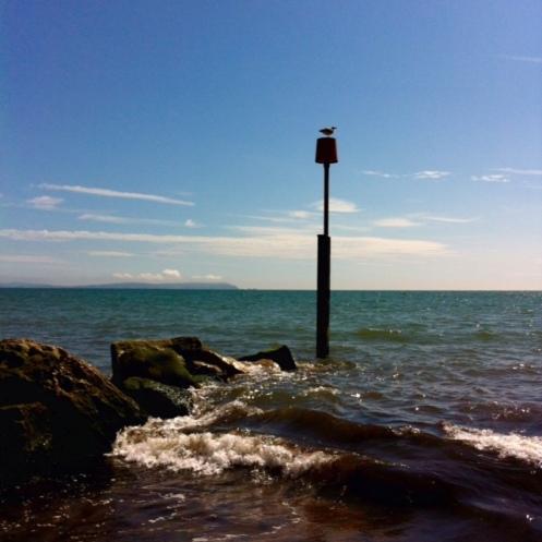 seasidegull