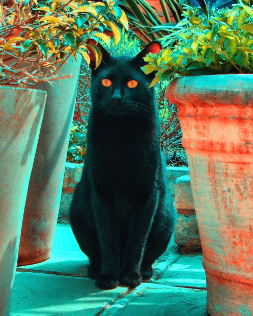 071115 caturday