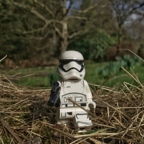 Stormie hayseed